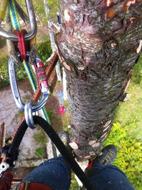 Matériel pour grimper aux arbres