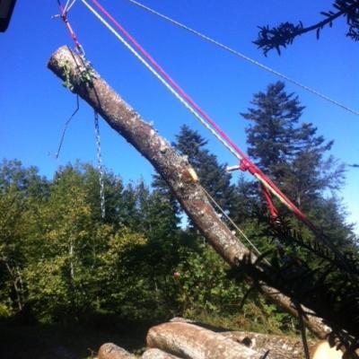 évacuation grumes de bois avec tyrolienne