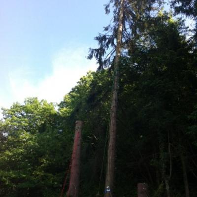 démontage arbre