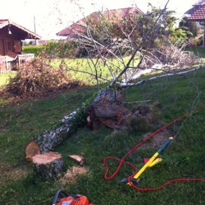 abattage dirigé de l'arbre
