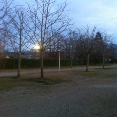 alignement des platanes dans le parking